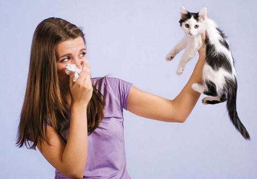 Тест: Насморк или аллергия?